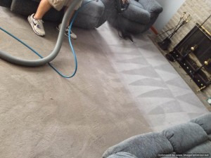 STEAM TEAM CARPET CLEANER WILKES BARRE NEPA